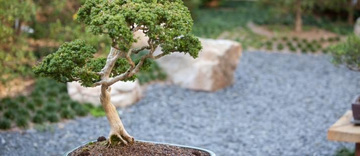 Garden Center Bonsai Monastery of the Holy Spirit